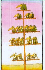 hierarchy-of-birds