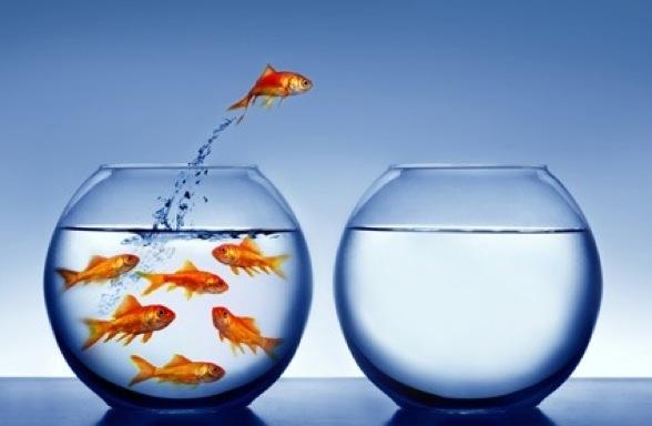 fish_bowl_jump